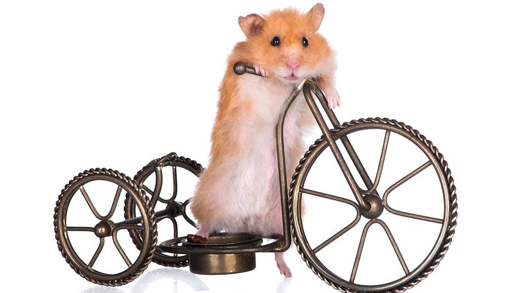 Ein Hamster sitzt auf einem Miniatur-Fahrrad