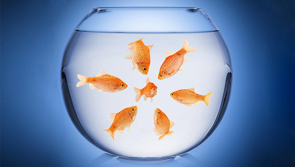 Mobbing Ein Goldfisch im Glas wird von 5 weiteren umringt
