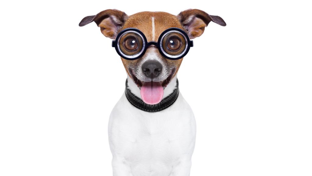 Zu sehen ist ein Hund, der eine Brille trägt