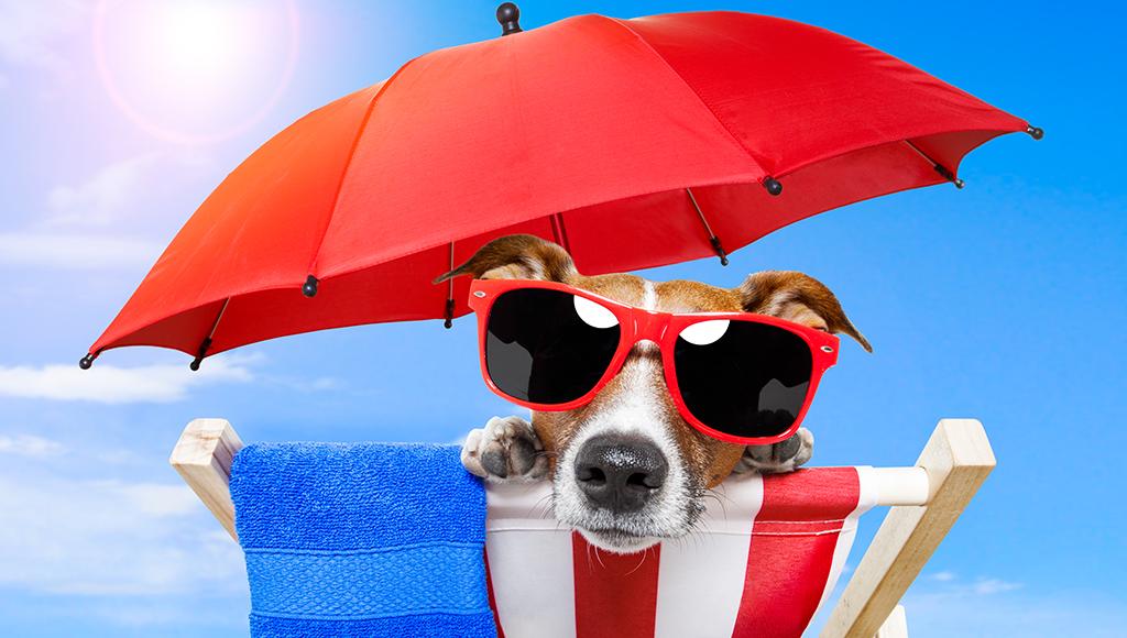 Hund liegt mit Sonnenbrille im Liegestuhl. Schatten spendet ein Sonnenschirm.